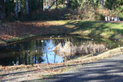 Weaver Creek Water Quality Pond